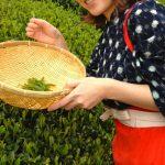 松尾芭蕉も一句詠んだ、日本三大茶のひとつ「静岡茶」