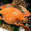 佐賀で楽しむ絶品「竹崎カニ」!美味しさの秘密は有明海にあった!