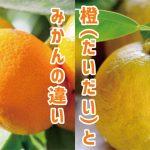 「橙(だいだい)」と「みかん」の違いって何?