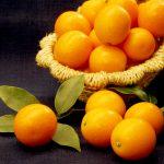 生産量日本一の宮崎!パクっと丸かじりフルーツ「キンカン」